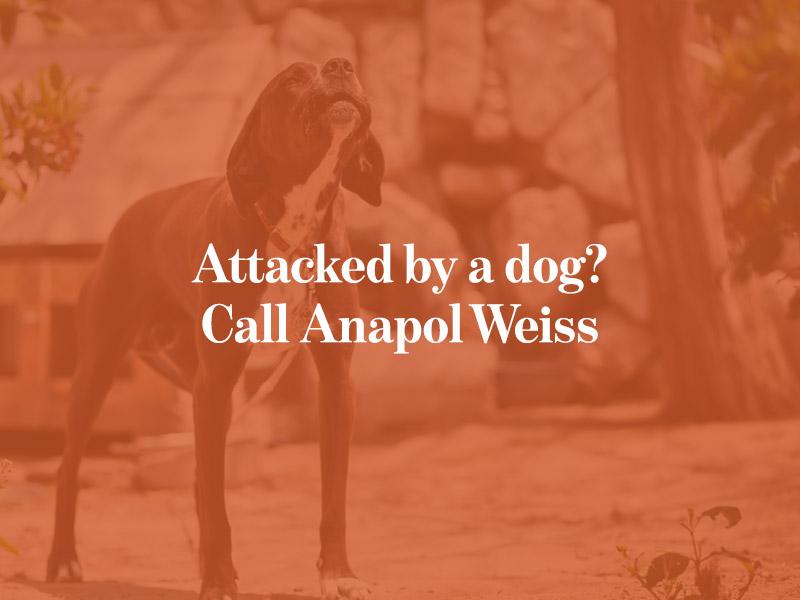 Dog Attack Attorneys